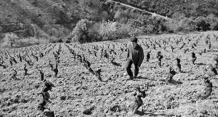 Petalos Winery