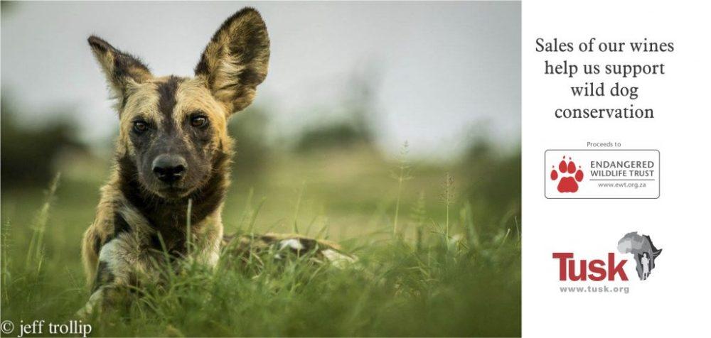 Wolf Wild Dog Charity