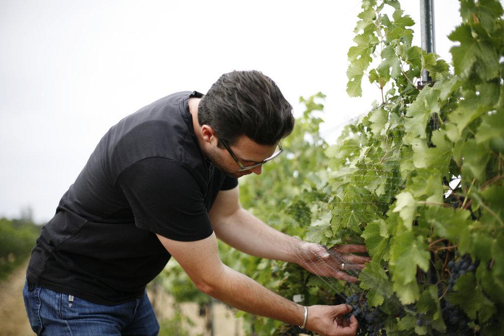 Alleromb Vines