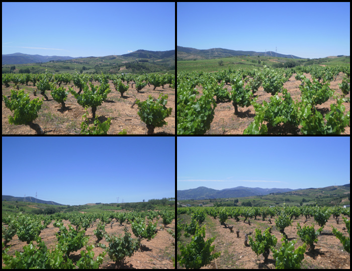 Mencia Vineyards